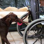 ca-haiko-tire-fauteuil